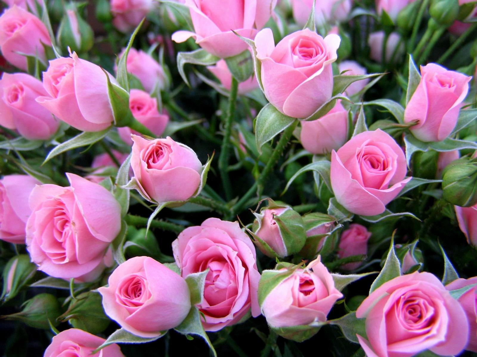 Что подарить на 8 марта женщинам  жене любимой маме