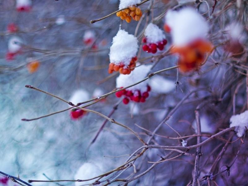 Отзыв о празднике осени в саду