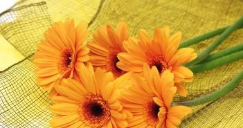 Что лучше подарить девушке цветы или игрушку