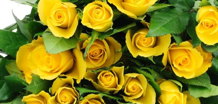 Желтые розы подарок к чему это