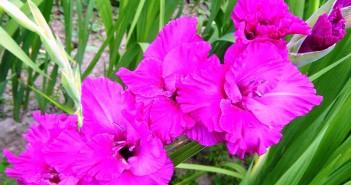Какие цветы любят Близнецы?