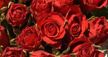 Какие цветы можно подарить маме