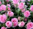 Какие цветы подарить женщине на 65 лет