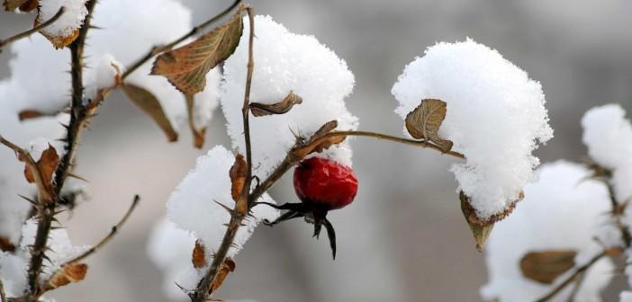 12 декабря - какие праздники сегодня, именины, события истории, дни рождения