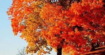 12 ноября - какие праздники сегодня, именины, события истории, дни рождения