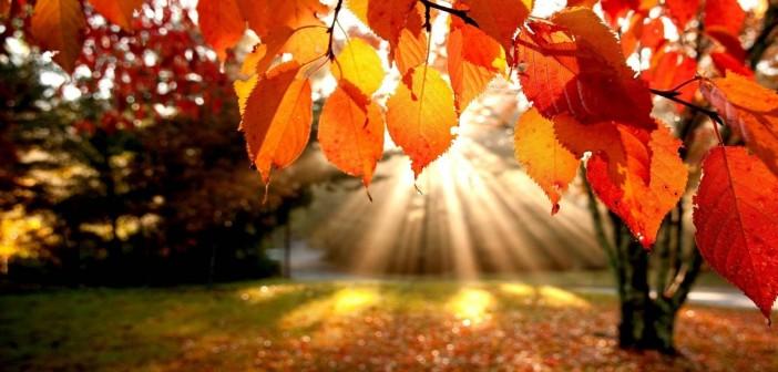 17 ноября - какие праздники сегодня, именины, события истории, дни рождения