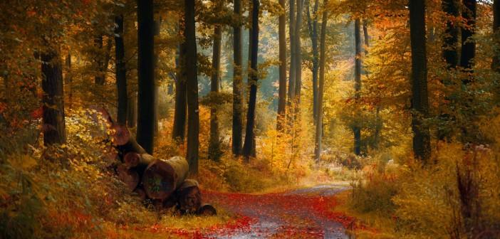 19 ноября - какие праздники сегодня, именины, события истории, дни рождения