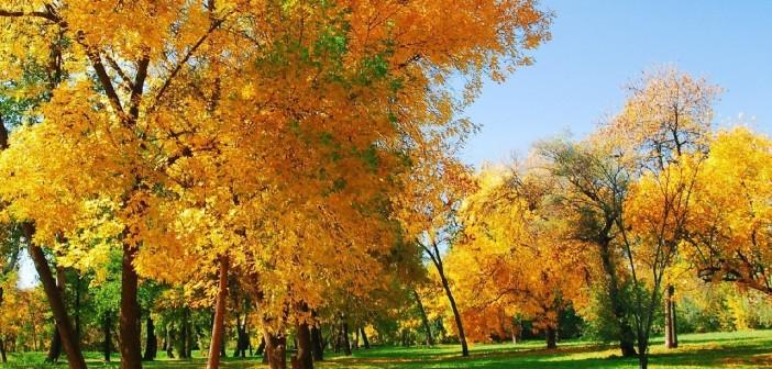 2 ноября 2015 - какие праздники сегодня, именины, события истории, дни рождения