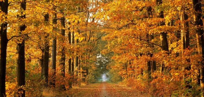 24 ноября - какие праздники сегодня, именины, события истории, дни рождения