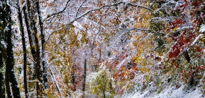 9 ноября - какие праздники сегодня, именины, события истории, дни рождения