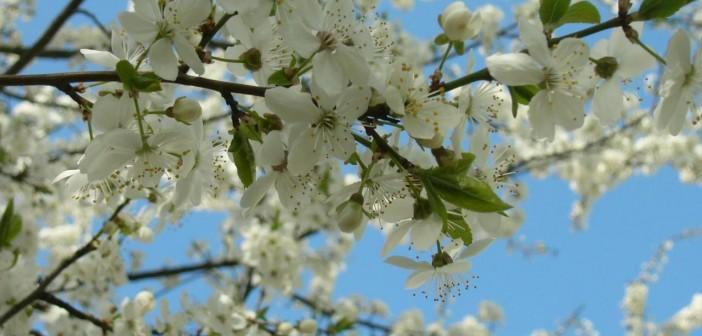 1 мая - какие праздники сегодня, именины, события истории, дни рождения