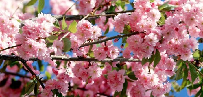 10 мая - какие праздники сегодня, именины, события истории, дни рождения