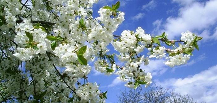 12 мая - какие праздники сегодня, именины, события истории, дни рождения