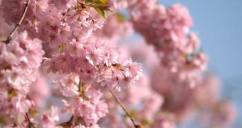 13 апреля - какие праздники сегодня, именины, события истории, дни рождения