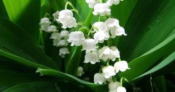 13 мая - какие праздники сегодня, именины, события истории, дни рождения