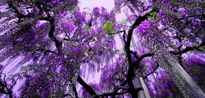 17 мая - какие праздники сегодня, именины, события истории, дни рождения