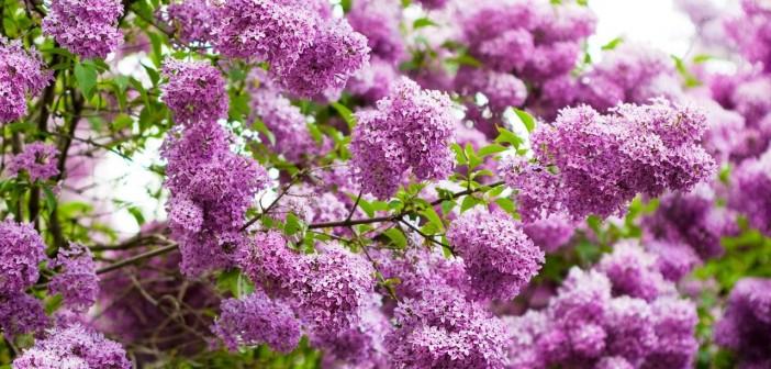 18 мая - какие праздники сегодня, именины, события истории, дни рождения
