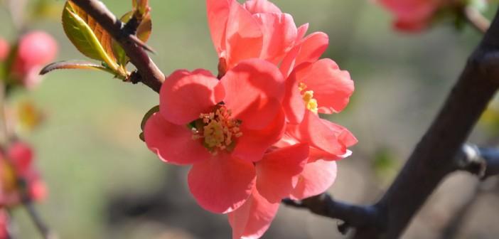 19 апреля - какие праздники сегодня, именины, события истории, дни рождения