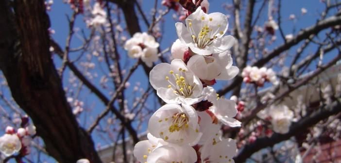 21 апреля - какие праздники сегодня, именины, события истории, дни рождения