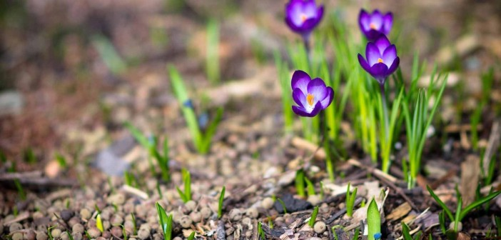 22 апреля - какие праздники сегодня, именины, события истории, дни рождения
