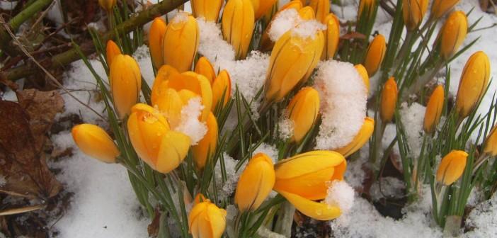 24 марта - какие праздники сегодня, именины, события истории, дни рождения