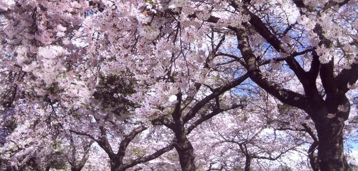 25 апреля - какие праздники сегодня, именины, события истории, дни рождения