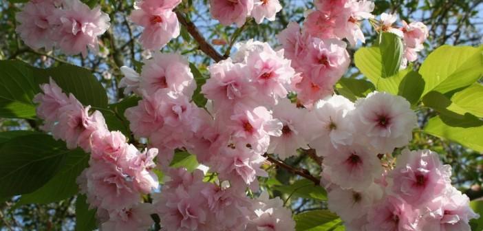 27 апреля - какие праздники сегодня, именины, события истории, дни рождения