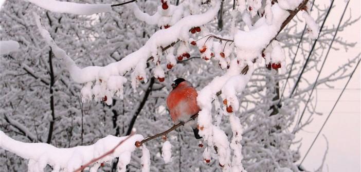 29 февраля - какие праздники сегодня, именины, события истории, дни рождения