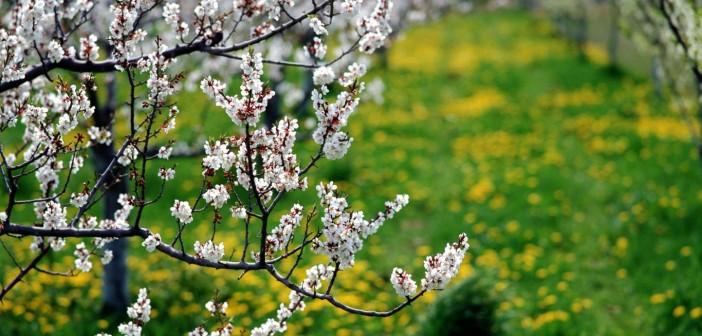 Праздник каждый день - Страница 12 30-maya-kakie-prazdniki-segodnya-imeninyi-sobyitiya-istorii-dni-rozhdeniya-702x336