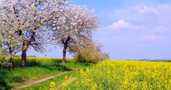 31 мая - какие праздники сегодня, именины, события истории, дни рождения