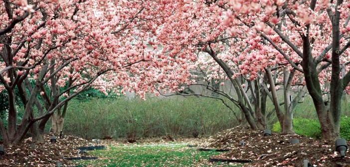4 апреля - какие праздники сегодня, именины, события истории, дни рождения