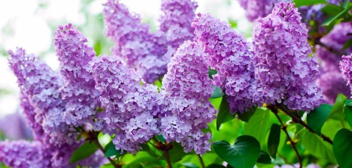 4 мая - какие праздники сегодня, именины, события истории, дни рождения