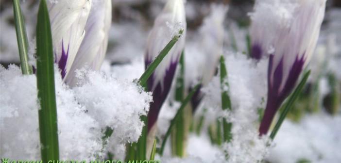8 марта - какие праздники сегодня, именины, события истории, дни рождения