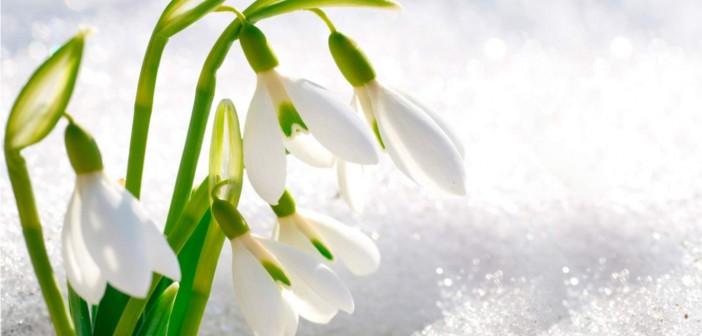 9 марта - какие праздники сегодня, именины, события истории, дни рождения