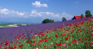 1 июля - какие праздники сегодня, именины, события истории, дни рождения