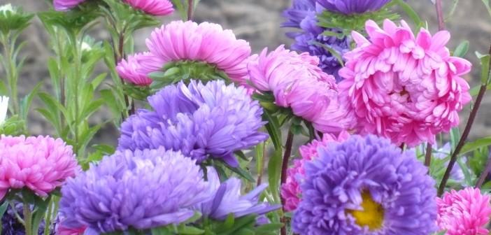 15 августа - какие праздники сегодня, именины, события истории, дни рождения
