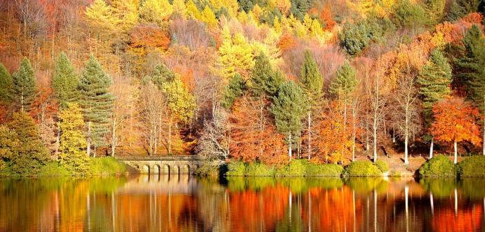 15 октября - какие праздники сегодня, именины, события истории, дни рождения