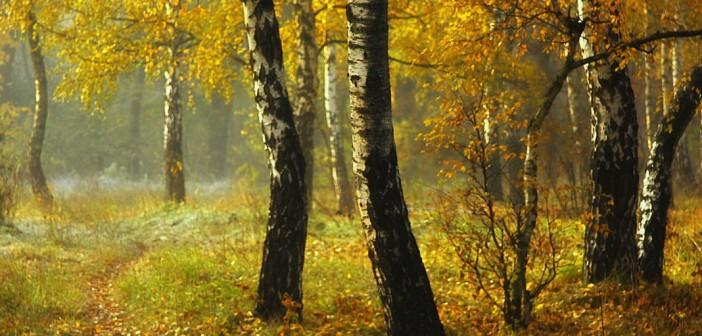 16 октября - какие праздники сегодня, именины, события истории, дни рождения