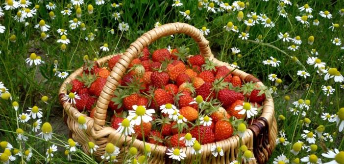 18 июня - какие праздники сегодня, именины, события истории, дни рождения