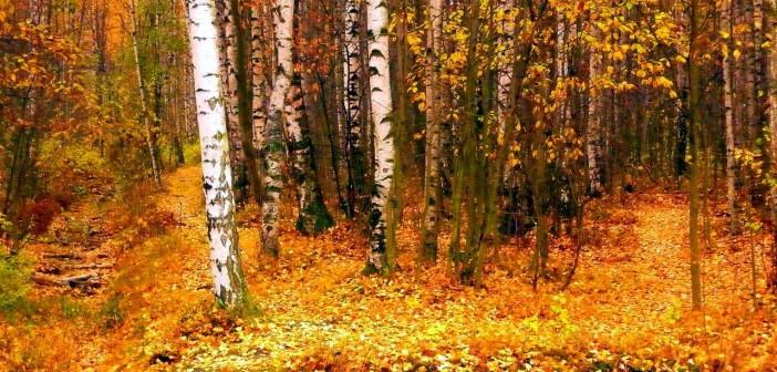 2 октября - какие праздники сегодня, именины, события истории, дни рождения