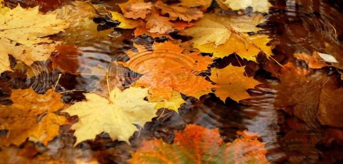 20 октября - какие праздники сегодня, именины, события истории, дни рождения