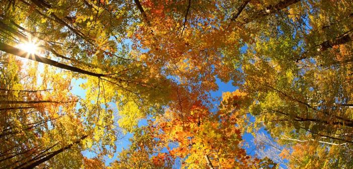 22 октября - какие праздники сегодня, именины, события истории, дни рождения