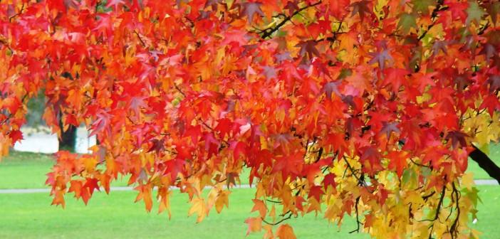 24 октября - какие праздники сегодня, именины, события истории, дни рождения