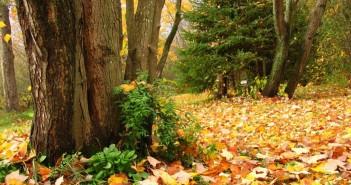 31 октября - какие праздники сегодня, именины, события истории, дни рождения