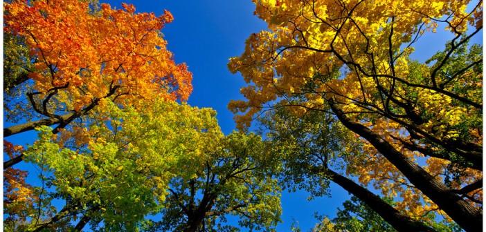 4 сентября - какие праздники сегодня, именины, события истории, дни рождения