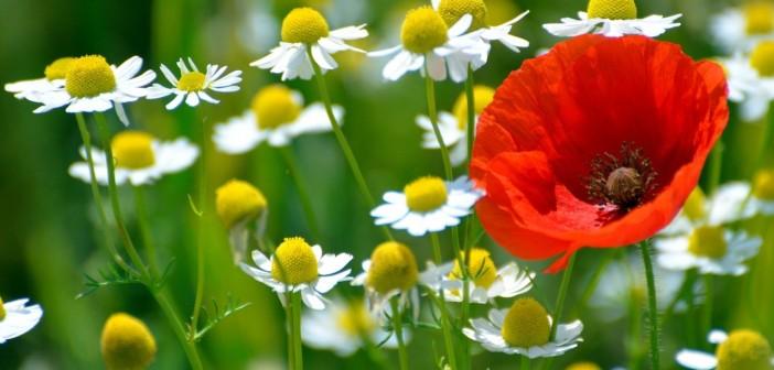 7 июня - какие праздники сегодня, именины, события истории, дни рождения