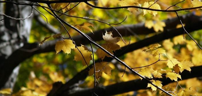 7 сентября - какие праздники сегодня, именины, события истории, дни рождения