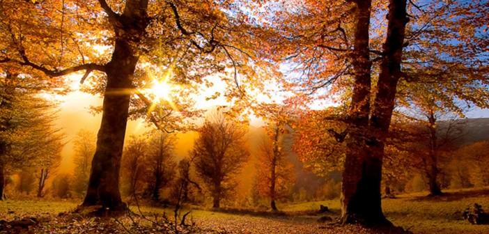 8 октября - какие праздники сегодня, именины, события истории, дни рождения