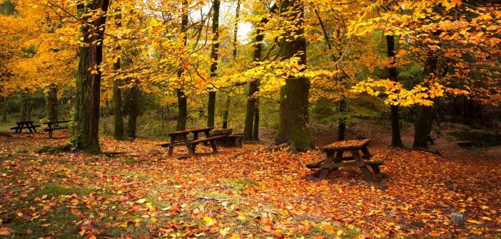 9 октября - какие праздники сегодня, именины, события истории, дни рождения