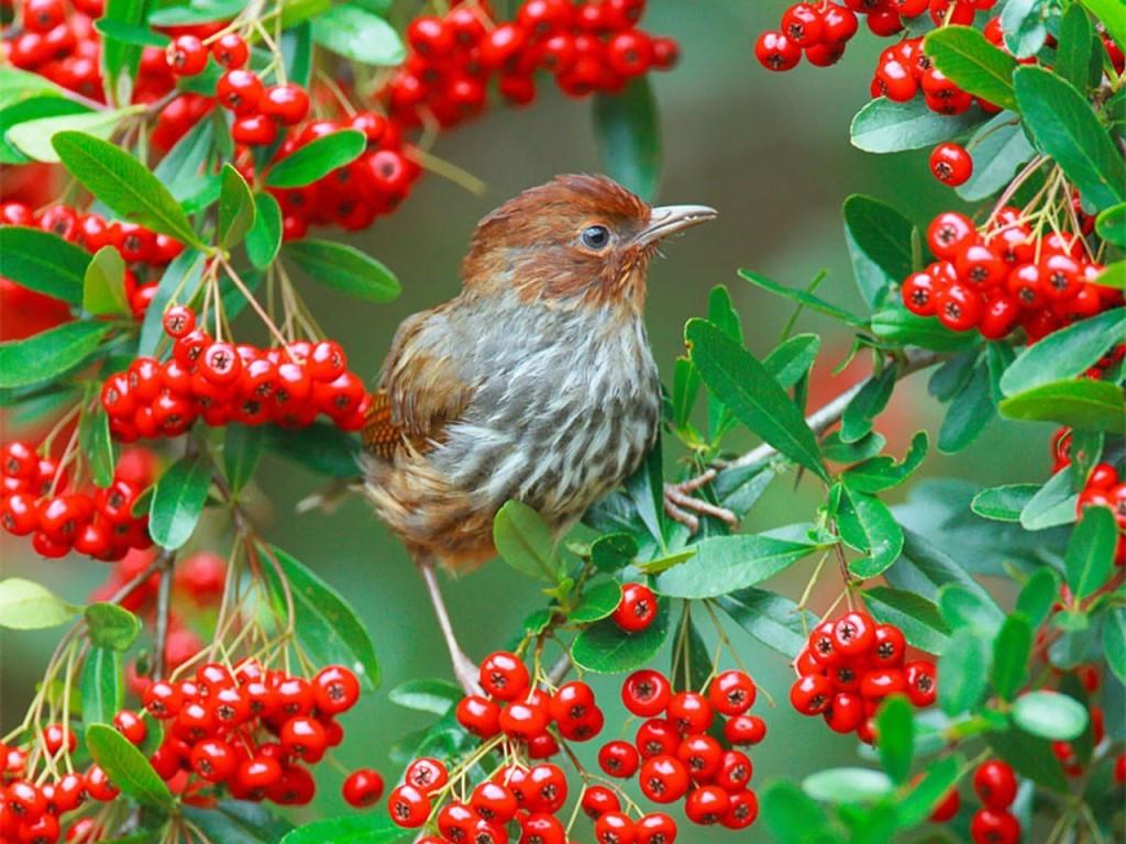 Картинки на день птиц, изготовление новогодней открытки
